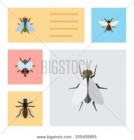 Flat Icon Housefly Set Of Fly, Bluebottle, Mosquito And Other Vector Objects