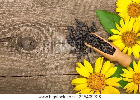Sunflower seeds and flower on wooden background with copy space for your text. Top view.