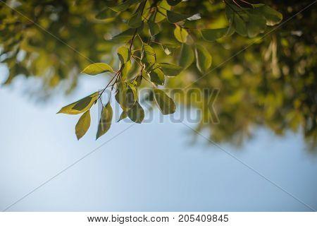 beautiful fresh leaves in public park,beautiful background