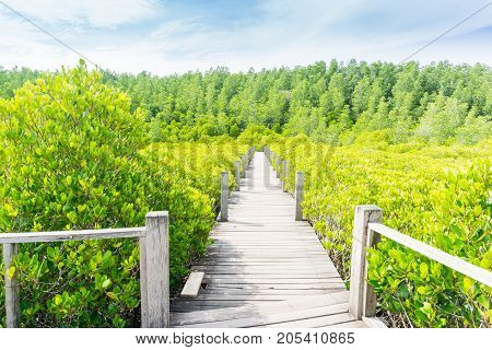 Beautiful mangrove forest Nature Preserve and Forest (Tung Prong Thong) in Thailand.