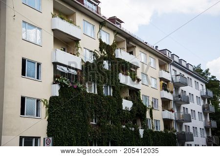 House covered with ivy, real, estate, housing,