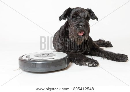 Studio shot of the Giant Black Schnauzer dog lying next to the robotic vacuum cleaner. All potential trademarks and control buttons are removed.