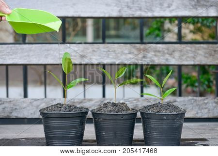 Watering to growing plants in the flower pots