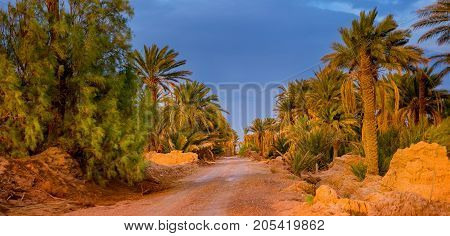 road through a palm grove bright saturated colors of a decline the gravel road going to a distance