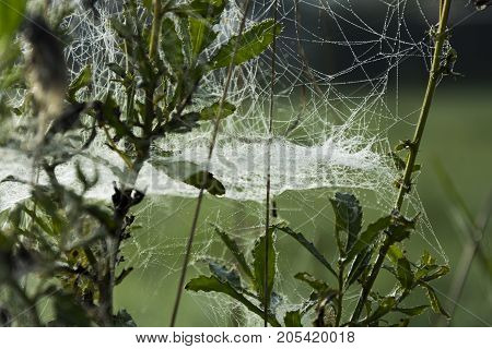 Dewy spider web in grass on blurry green background.