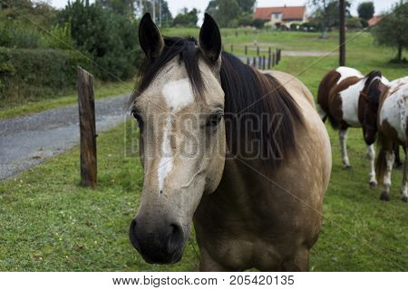 Brown and white spotted horse with brown mane on grazing land with others horses.