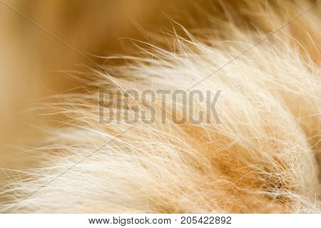 red cat fur as background. macro . Photo of an abstract texture