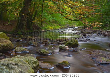 Autumn Stream Long Exposure, Eifel