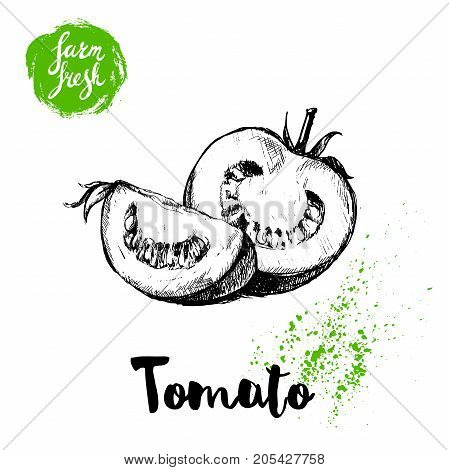 Hand drawn sketch style whole tomatos half and quarter segment sliced. Eco food vector illustration poster. Farm fresh food.