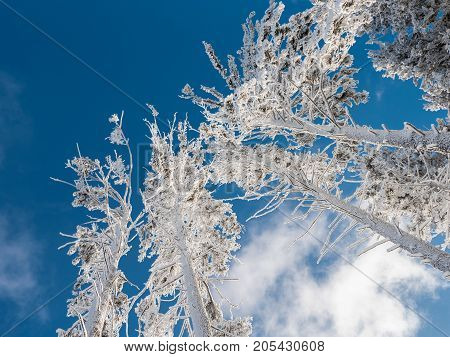 Snowy winter tree branches against blue sky