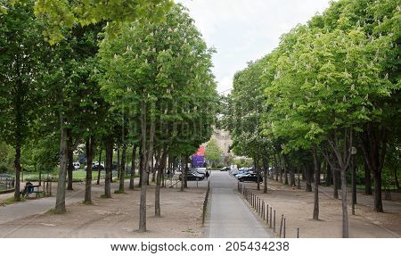 Paris; France- May 01; 2017: Chestnuts are blossoming at the intersection of the Champs Elysees and Selv Avenue. Citizens rest on the bench and walk