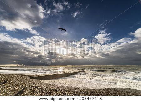 The seagull is flying at sunset over the sea landscape, waves, storm, infinity