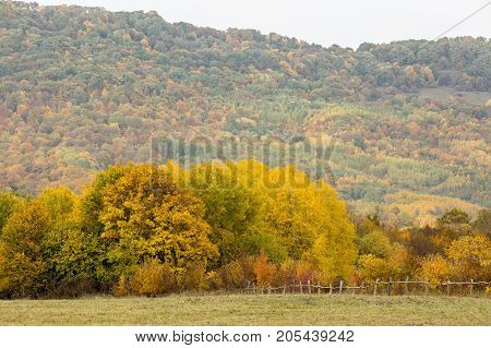 livestock, countryside, freedom concept. gree pasture is fenced with weak fence made of branches and sticks, it ended with multicolored forest, that grows on the mountain