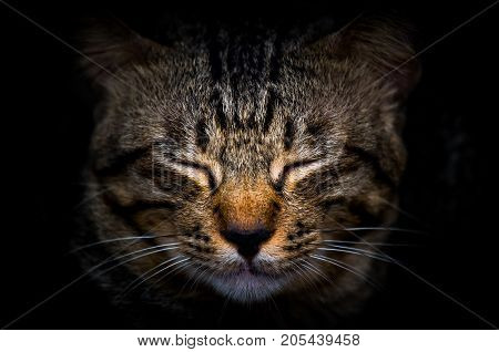 The beauty of the cat while close eyes in the dark Cute cat in the sleep