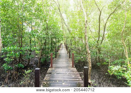Tung Prong Thong Golden Mangrove Field natural areas in Rayong of Thailand.