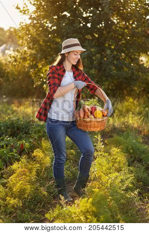 Gardener with freshly harvested vegetables in garden on sunset. Happy woman farmer holding basket with crop. Gardening, agriculture, autumn harvest concept