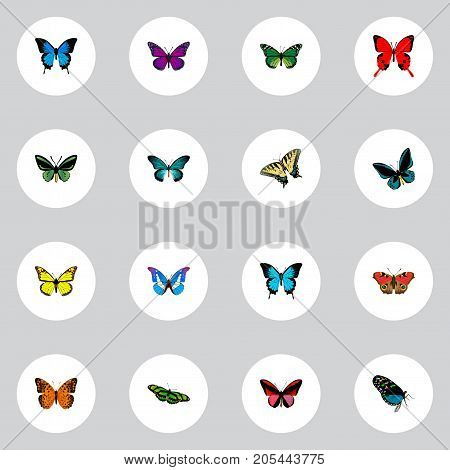 Realistic Checkerspot, Archippus, Birdwing And Other Vector Elements