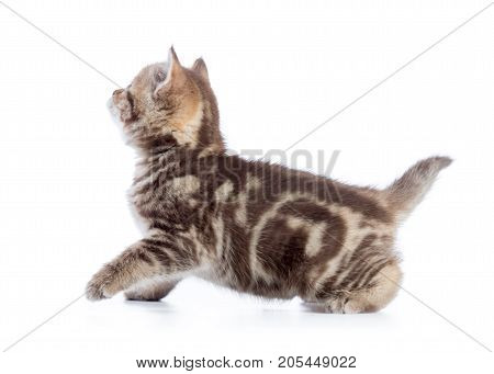 Active running cat side view isolated on white background