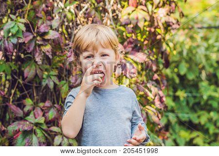New Zealand Exotic Food. Berry Nergi, Or Small Kiwi. Child Picking Green Baby Kiwi Fruit Actinidia A
