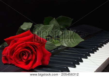 Red rose on keyboard of the synthesizer on a black background