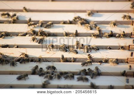 The Bees Inside A Beehive In Field