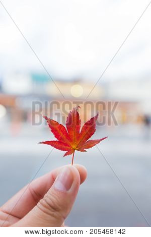 Autumn Leaves Change Color Into The Winter