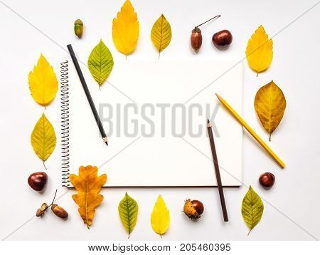 Autumn composition with sketchbook and pencils on white background decorated with yellow and green leaves chestnuts acorns. Fall still-life. Artistic workplace with space for text. Flat lay top view view from above