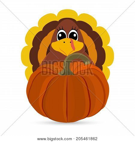 Funny turkey peligrimm with a pumpkin for Thanksgiving