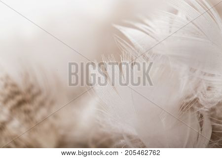 duck feathers as a background. macro . Photo of an abstract texture