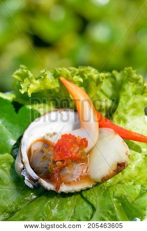 Cooked Cockles