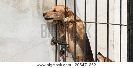 dogs locked up victims of animal abuse and abuse