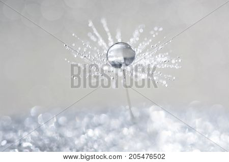Dandelion with drops of dew in a silver color. Water drops on a parachutes dandelion on a beautiful silver background. Soft dreamy tender artistic image snowflake.