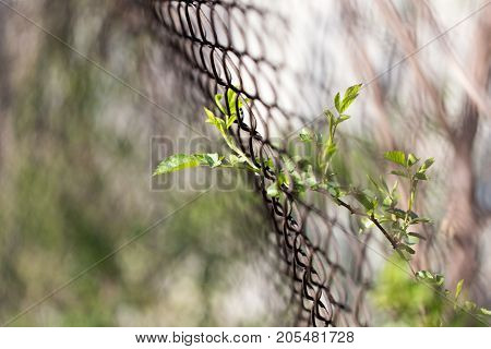 Steel wire mesh fence with trees. . In the park in nature