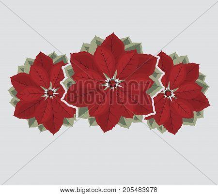 Vector illustration decorative poinsettia flower, Christmas card