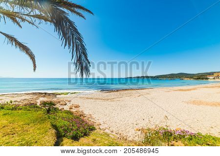 Palm tree by the shore in Le Bombarde beach Sardinia