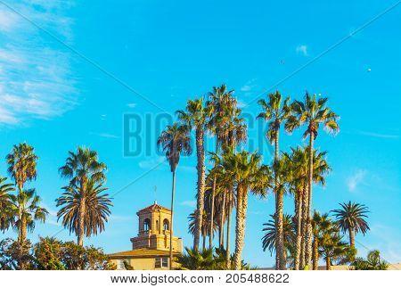 Palm trees in La Jolla shoreline California