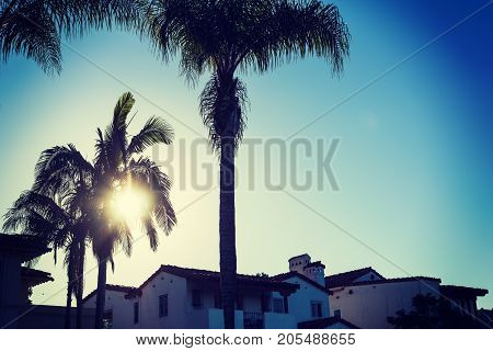 Palm silhouettes in San Diego at sunset California
