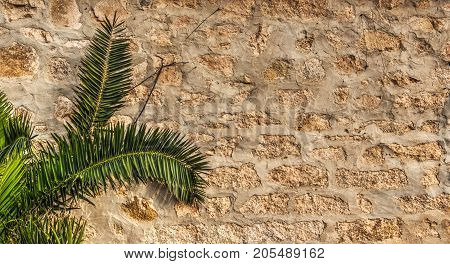small palm tree and rustic wall in Sardinia Italy