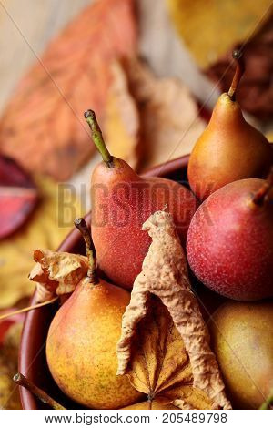 Pears. Pears Harvest. Closeup.fresh Organic Pears In Clay Plate With Autumn Leaves On Wooden Table.