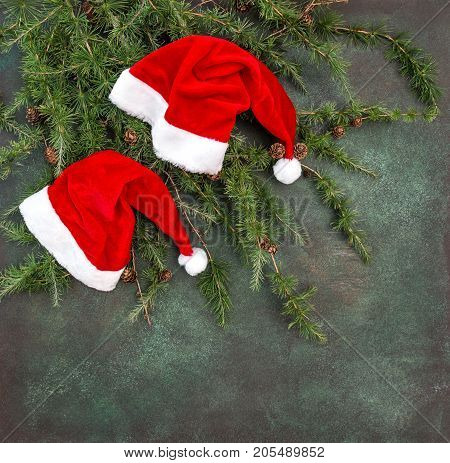 Christmas tree branches with red hats. Holidays background