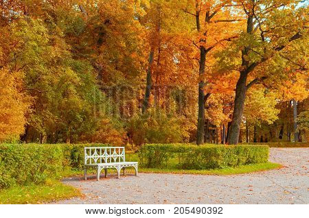 Autumn landscape. White bench in the autumn park under colorful autumn trees. Autumn. Park autumn nature with autumn trees and fallen autumn leaves. Autumn landscape scene