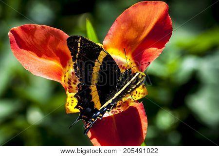red flower butterfly pretty wild green background
