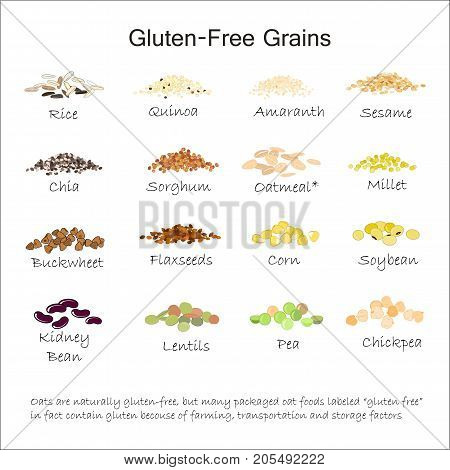 A variety of gluten free grains. Buckwheat, amaranth, rice, millet, sorghum, quinoa, chia seeds, flax seeds, sezam oatmeal legumes Vector isolated on white