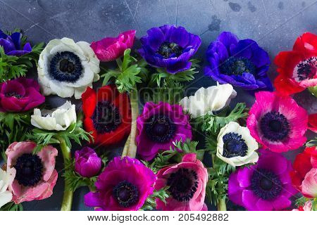 Fresh colorful fresh Anemones flowers heads pattern close up background