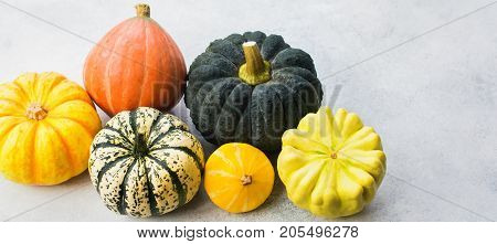 Long photo of different pumpkins and gourds on the off white background, copy space for text, selective focus