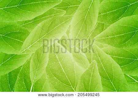 Abstract autumn green color background. Beautiful leaves texture.