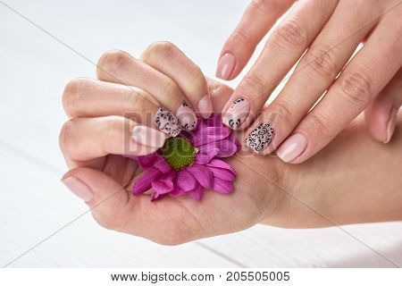 Beautiful chrysanthemum in female hands. Gentle beige manicure with black art. Women arms treatment and care.