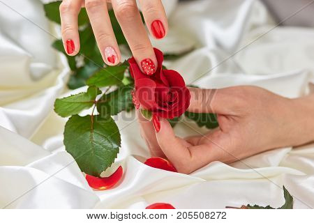 Hands with manicured nails and red rose. Female hand with red nails tearing off petals of red rose on white silk.