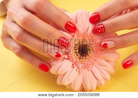 Female manicured hands and peach gerbera. Woman well-groomed hands holding peach color gerbera on yellow background. Skin and nails care.