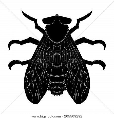 Insect silhouette.fly. Musca domestica. Insect fly silhouette Vector illustration